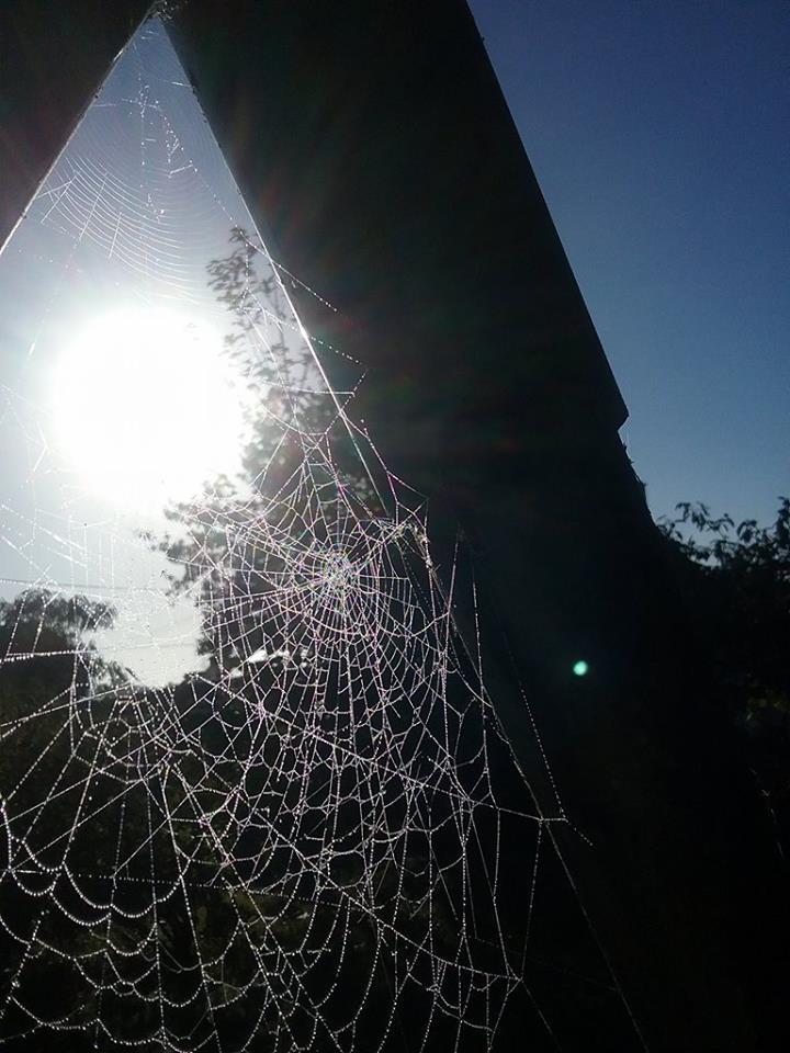 Enfants : capturez des araignées dans votre viseur !
