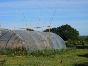 Un jardin en 3 dimensions – Construire une échelle à haricots !