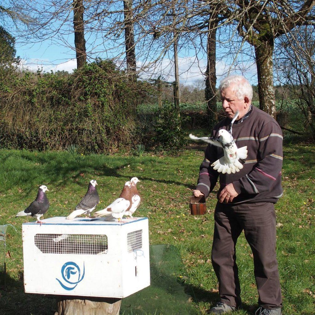 Jean-Claude et ses drôles de pigeons culbutants