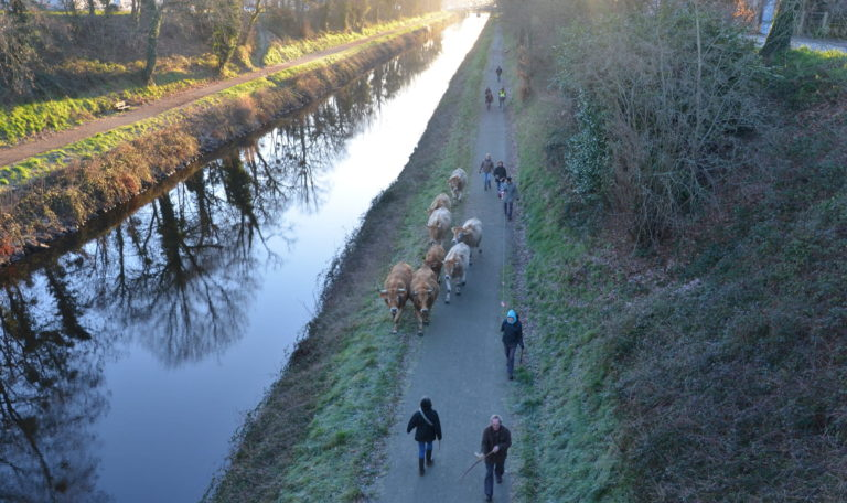 Transhumance du troupeau de vaches du Transformateur @ Le Transformateur