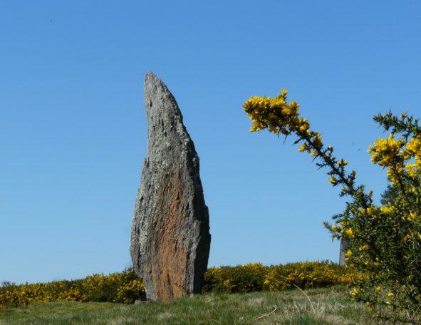 """Visite guidée """"Alouette céleste et menhirs printaniers"""" @ Mégalithes et landes de Cojoux"""