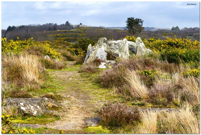 Découverte nature des landes de Cojoux @ Landes de Cojoux