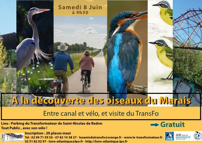 A la découverte des oiseaux du Marais