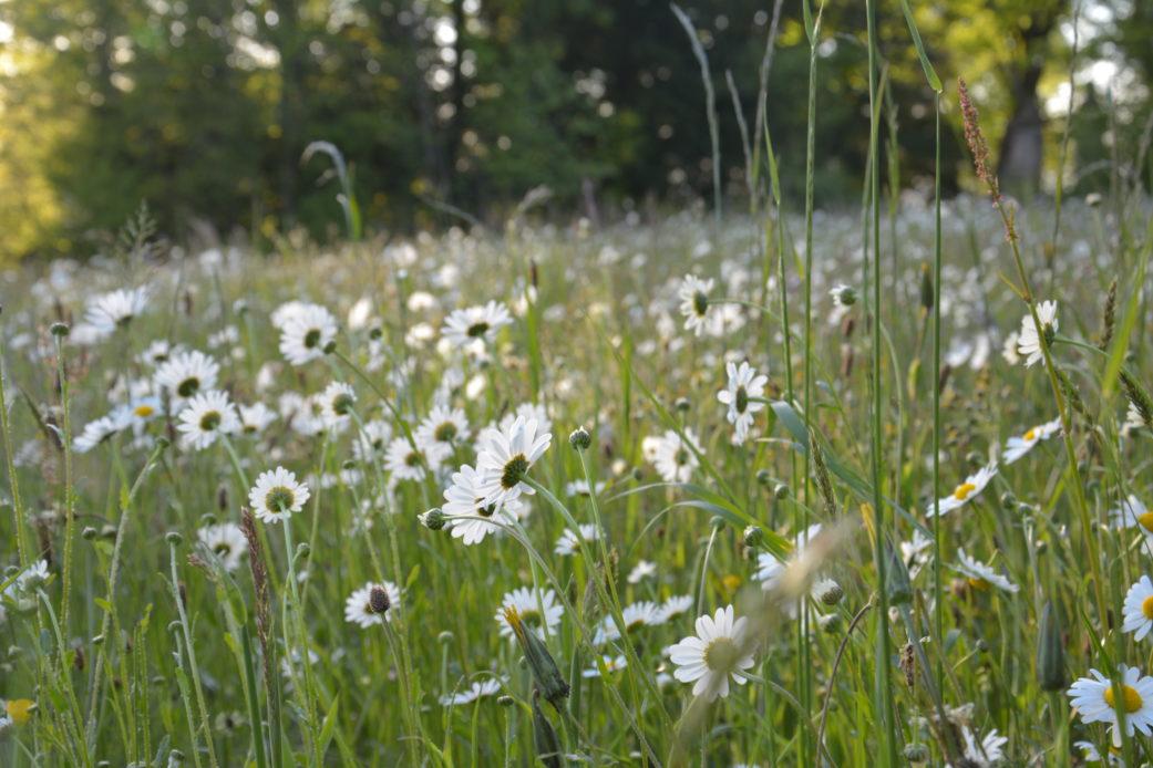 Balade conte et botanique