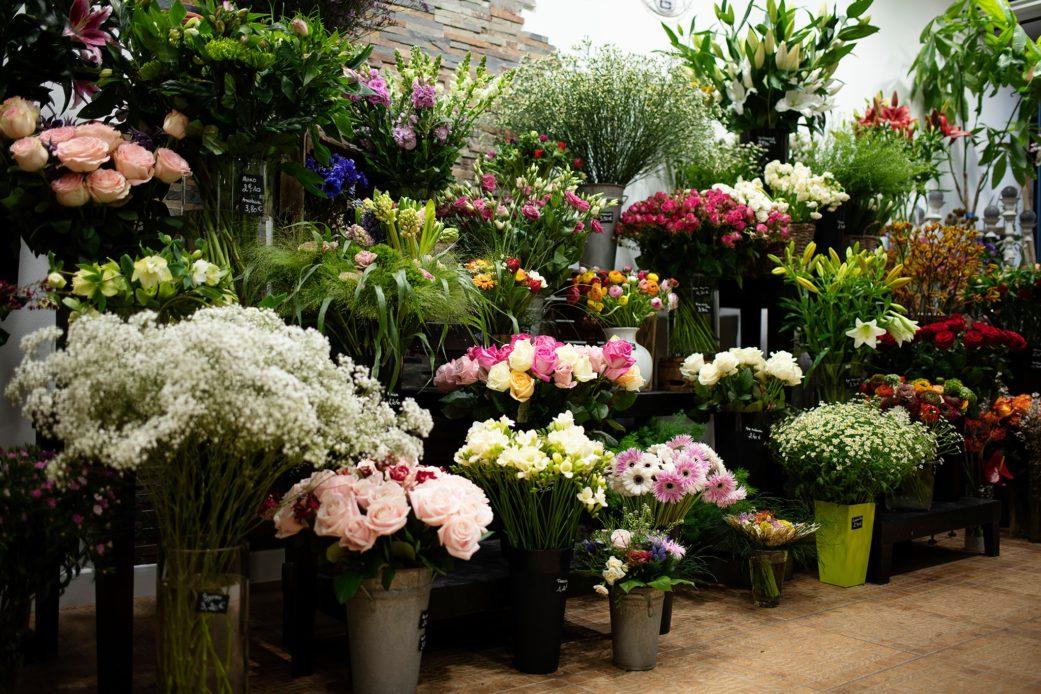 fleurs plantes bois