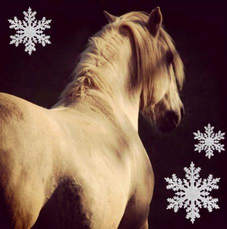 Contes d'hiver et poney @ Théâtre des Utopies