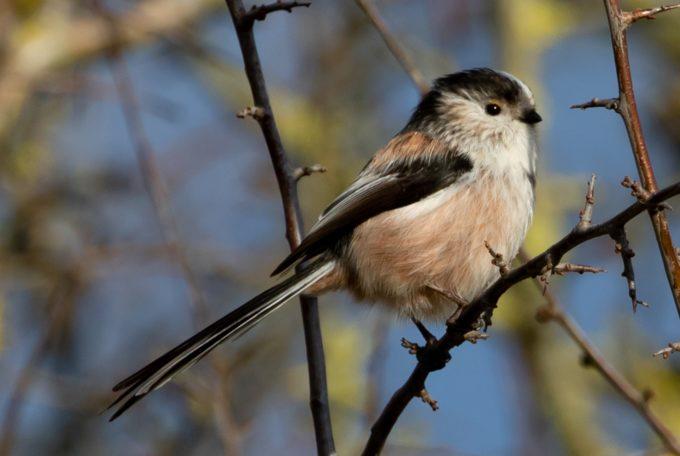 Comptage des oiseaux des jardins @ Parc de la Tour Duguesclin