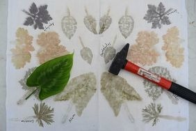 Atelier d'empreintes végétales