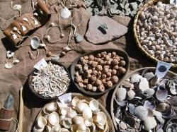 Atelier : parure préhistorique