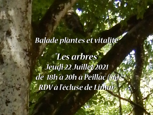 Balade plantes et vitalité